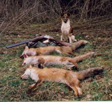 Фото собак на охоте.